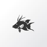 Hogfish icon symbol. Premium quality isolated aquatic element in trendy style.