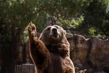 Wild greeting - 242889352