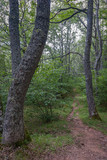 Forest of the natural park of sources Carrionas, in Palencia. Spain - 242899145