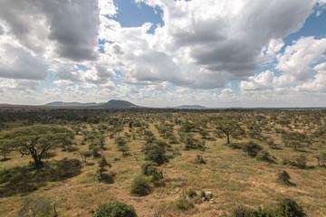 green field in Serengeti African safari
