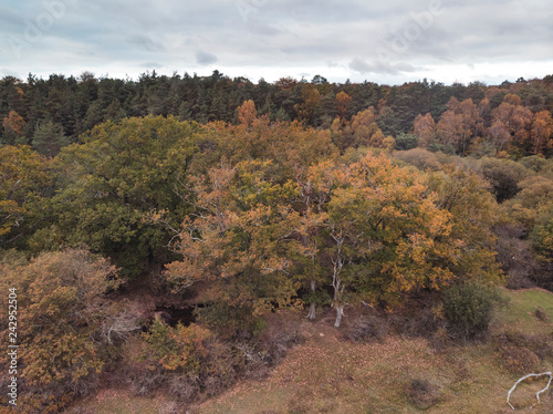 Beautiful bird's eye view drone landscape image during Autumn Fall of vibrant forest woodland