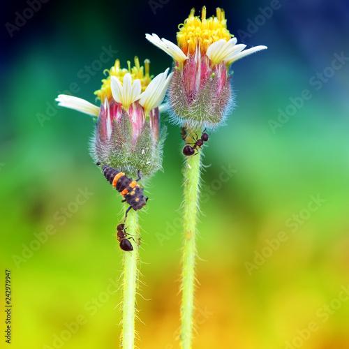 ant, flower, bug