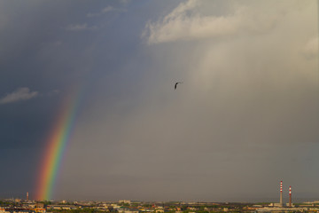 Colorful rainbow over the city