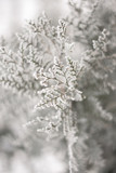 Close up of frozen beauty of nature in winter time. Vertical type of photo. - 243012100