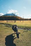 牧場の牛 Ranch cattle, Cow - 243016949