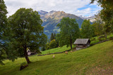 Rural mountain scenery with old style barn and cows at the meadow near Wengen village in Switzerland. - 243017733