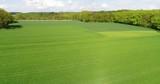Grüne Landschaft mit Feld und Waldgebiet - 243021350