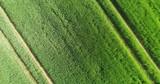 grünes Getreidefeld im Frühling aus der Luft - 243021386