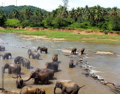 Elefantenherde im Wasser