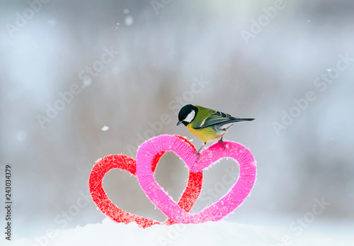 Foto Murales Valentine's day card with the bird is on the border of two knitted decorative elements hearts are in the snow in the Park