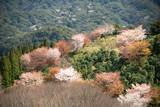 里山の春3 - 243040565