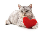 Cat with toy heart.