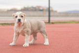 Puppy outdoor