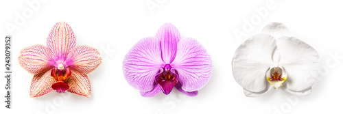 Orchid flowers set