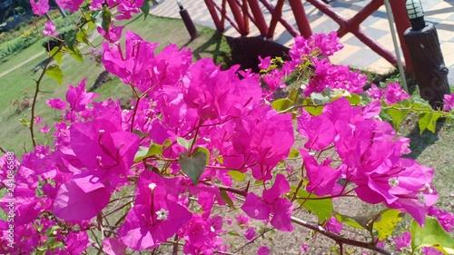Flower garden 5555 - 243086588