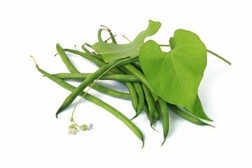 Haricots verts © hcast