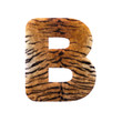 Tiger letter B - Capital 3d Feline fur font - suitable for Safari, Wildlife or big felines related subjects