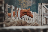 Portrait of a red horse - 243110925