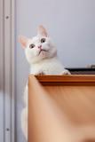 Kot na szafie