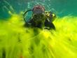 Leinwandbild Motiv Diving