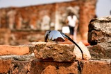 The reflection on a traveller's sunglasses at The Wat Mahathat, Ayutthaya, Thailand. This place also be one of ayutthaya historical park.