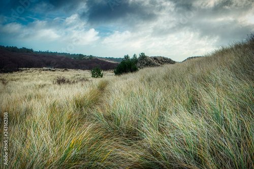 Leinwandbild Motiv Dunes on the North Frisian Island Amrum in Germany