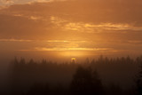Early foggy morning sunrise above forest landscape - 243166321