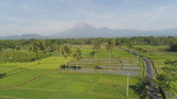 tropical landscape rice fields, mountains, palm trees. aerial view farmland with agricultural crops in rural areas Java Indonesia