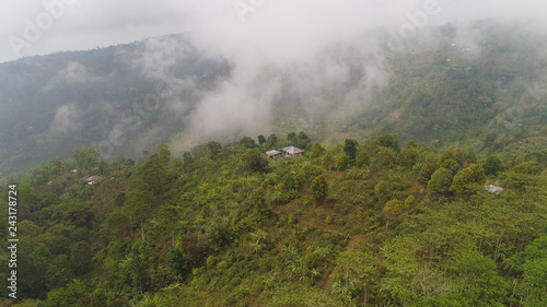 agricultural land, farmlands in rainforest covered clouds, fields with crops, trees. Aerial view farmers houses in jungle. tropical landscape Bali, Indonesia.
