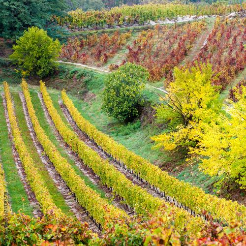 autumn vineyards in Rhona region