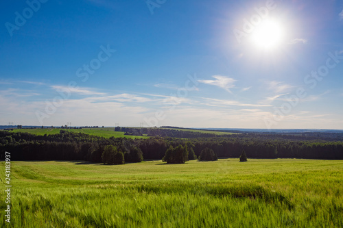 Foto Murales Beautiful summer landscape with plow and forest on a sunny day
