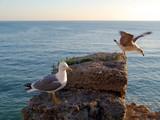 Gaviotas en la bahía de Cadiz capital, Andalucía. España. Europa