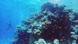 Coral reef underwater, a lot of fish, diving