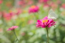 "Постер, картина, фотообои ""Flower butterfly in the garden"""