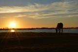 El amanecer, el caballo y el lago - 243225589