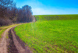 scenery with country road and green agricultural field - 243228987