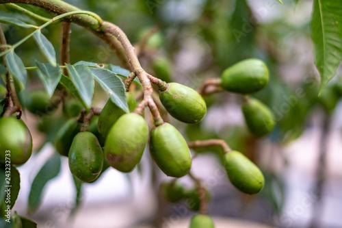 Foto Murales Brazilian caja plant