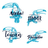 Toucan exotic bird vector sketch lettering - 243234330