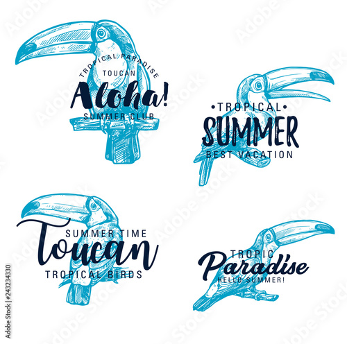 Toucan exotic bird vector sketch lettering