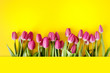 Fresh Pink tulips. Beautiful greeting card. Spring Holidays concept. Copyspace. Banner