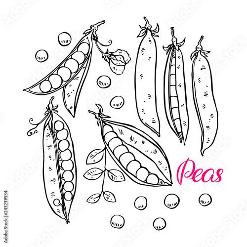set of ripe peas