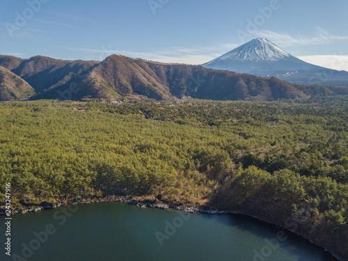 樹海と富士
