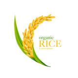 Rice realistic vector illustration - 243250145
