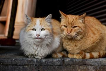 portrait of a cats