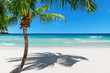Coco palm on sandy beach and turquoise sea on Paradise Jamaica island. Fashion travel and tropical beach concept.