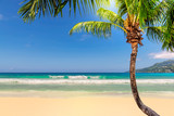 Sandy beach with coco palm and turquoise sea.  Summer vacation and travel concept.