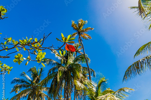 Saint Vincent and the Grenadines, palms