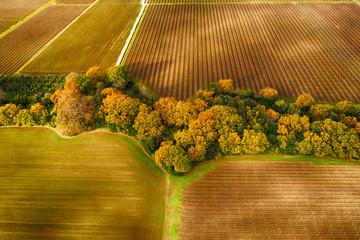 Aerial view of cultivated land in Chianti region, Tuscany, Italy