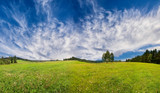 green fresh spring meadow - panoramic picture - 243265399