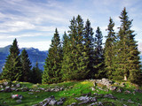 Evergreen trees on the plateau beneath the mountain ranges Churfirsten - Canton of St. Gallen, Switzerland